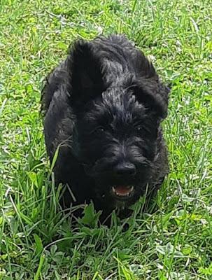 eduquer chien chiot annecy albertville thones ugine faverges