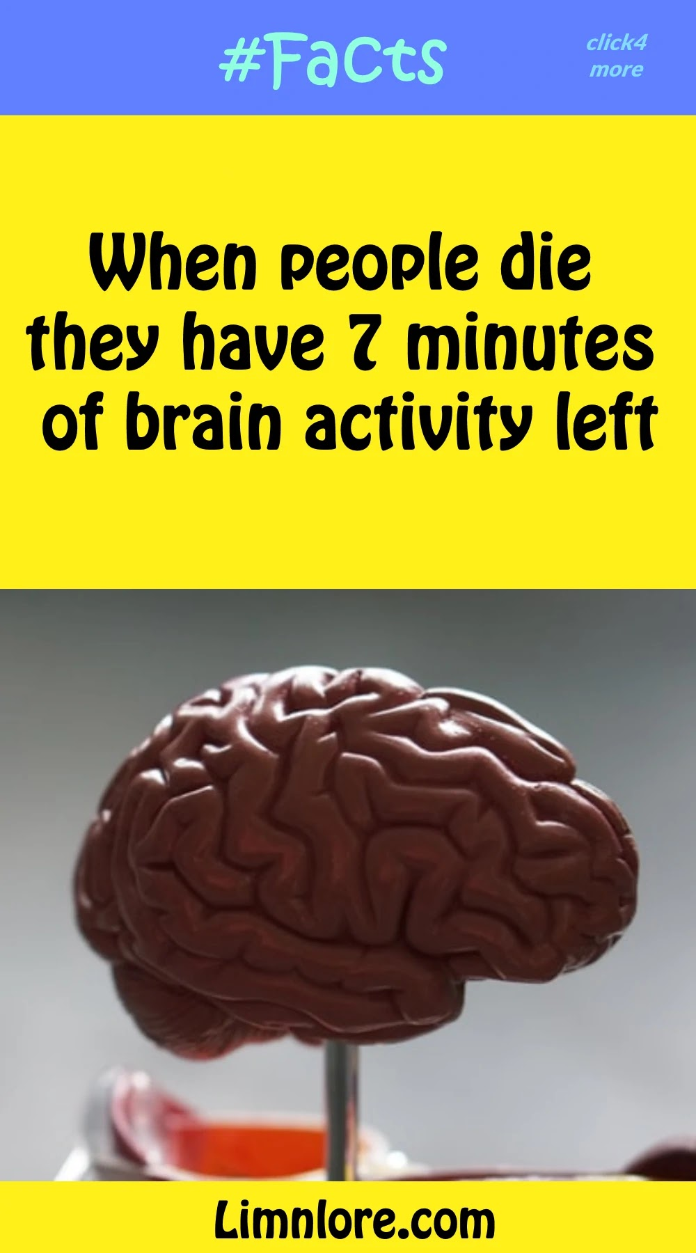 When people die they have 7 minutes of brain activity left.