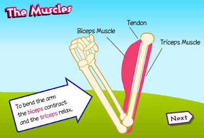 http://www.childrensuniversity.manchester.ac.uk/media/services/thechildrensuniversityofmanchester/flash/exercise_3_muscles.swf