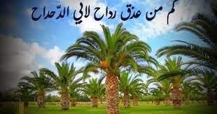 قصة ابو الدحداح