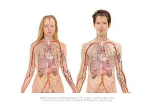 Bocoran Daftar Harga Organ Tubuh Manusia di Pasar Gelap dan Pandangan Islam Tentang Menjual Organ Tubuh