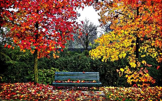 осень фото пейзаж
