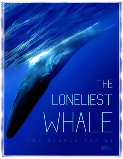 pelicula La ballena solitaria: La búsqueda de 52