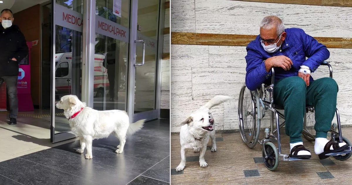 Dog In Turkey Waits For Days Outside Hospital For Her Owner To Return