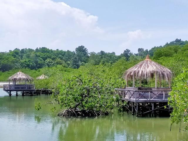 Hutan Mangrove Kepri Coral