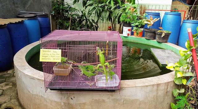 kolam ikan di mini zoo semut