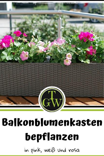Balkonblumen - ein Traum in rosa, pink und weiß - Gartenblog Topfgartenwelt #topfgarten #balkonblumen #gartengestaltung #sommerblumen #pelargonien #geranien #surfinien #petunien #verbenen