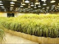 Mengenal Lebih Dalam Soal Pertanian Modern di Negara Jepang