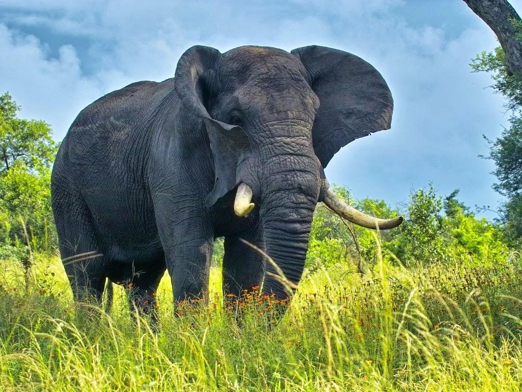 elephants wallpapers world - photo #19
