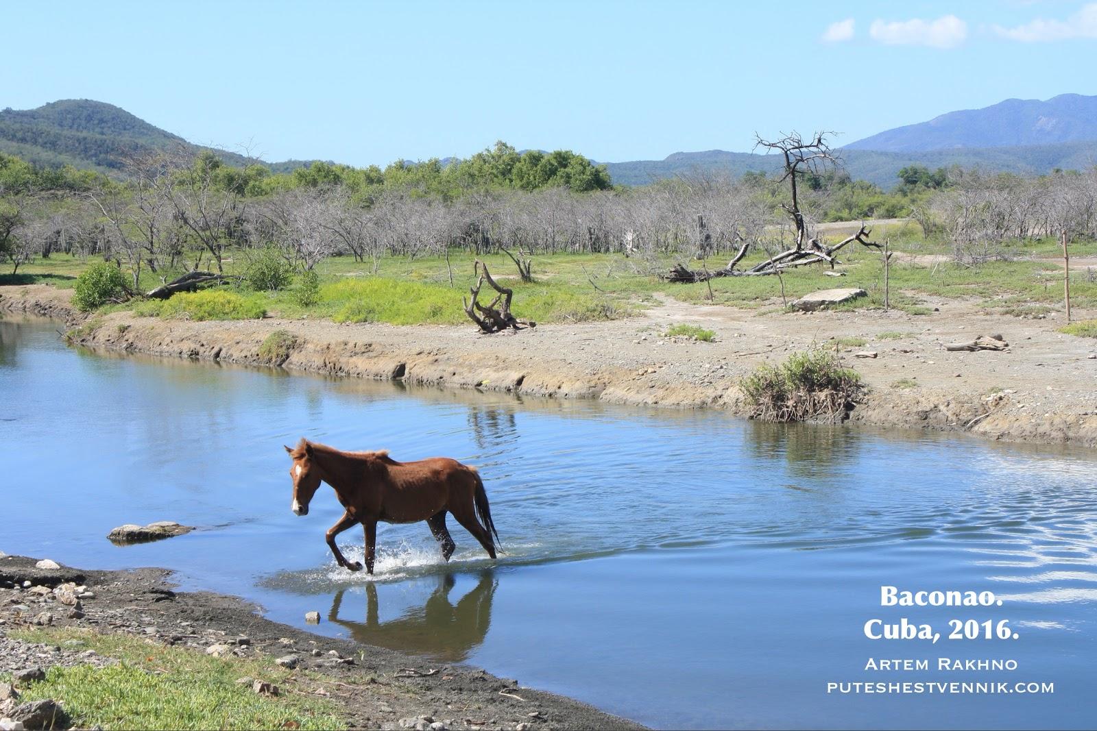 Лошадь переходит реку