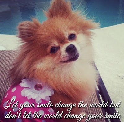 Let your smile change the world but don't let the world change your smile! Foxy, smoochie pooch, dog clothes, dog swimsuit, pink, polkadot, bikini, pomeranian, pool, cute dog photos, smile, quotes