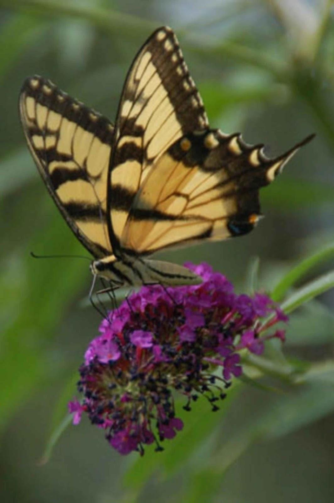 Garden Therapy Beautiful Butterflies