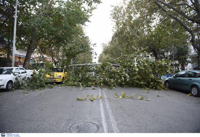 Καραβόμυλος: Γυναίκα τραυματίστηκε όταν την πλάκωσε δέντρο