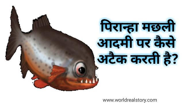 Fish tank piranha dangerous human kil ?