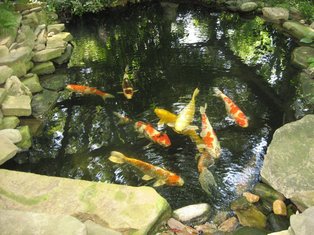 Top 10 awesome backyard aquarium ideas and pond designs for Koi pond pics