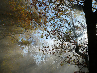 Ramas de árboles
