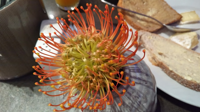 Norway, table decoration, Pincushion, Proteaceae
