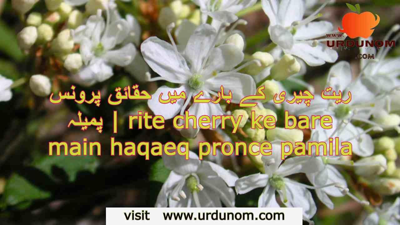 ریت چیری کے بارے میں حقائق پرونس پمیلہ | rite cherry ke bare main haqaeq pronce pamila