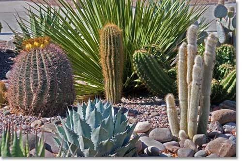 Arizona Landscaping Arizona Landscaping Some Very