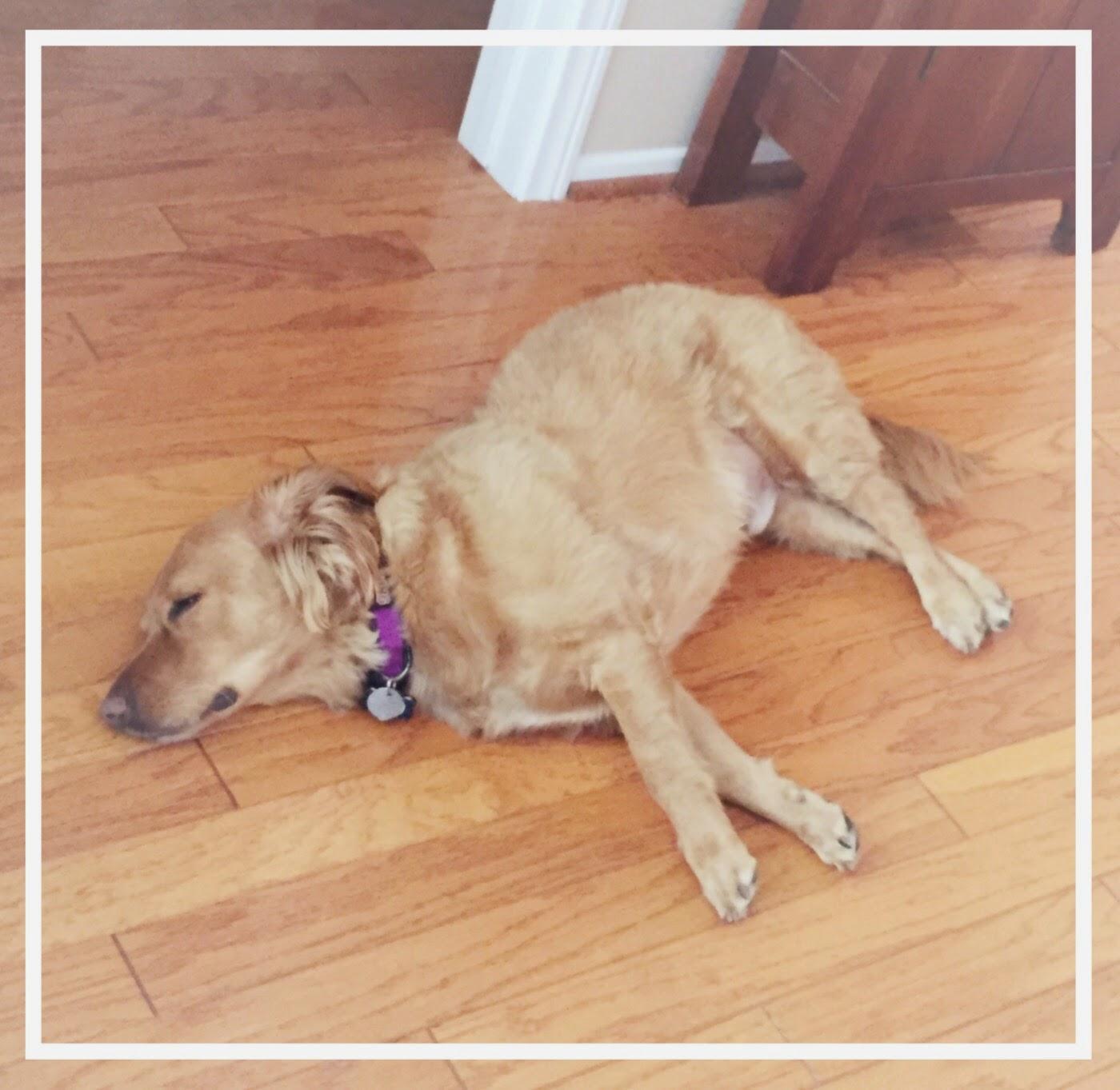 Winchester the Sleepy Dog