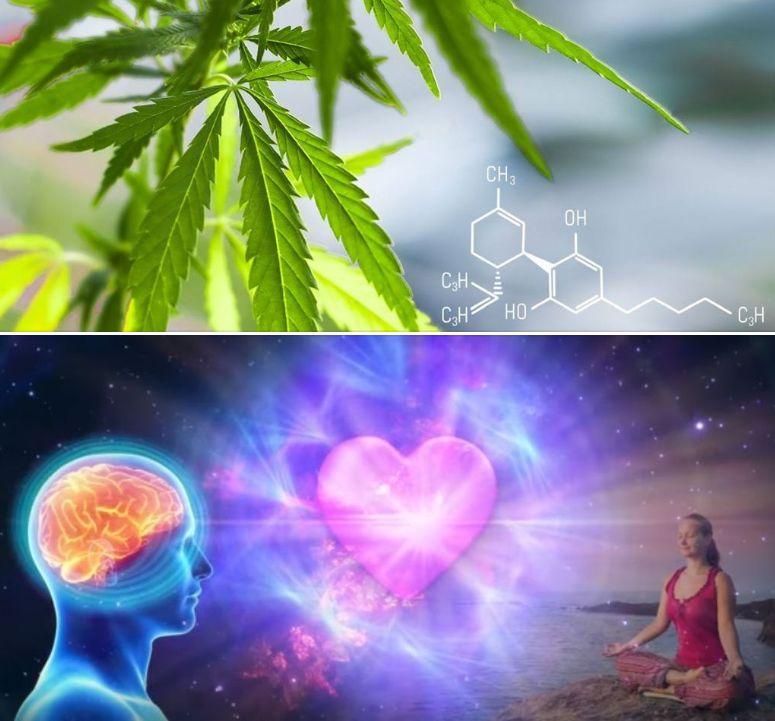 Orvosi Kannabisz mint új Innovatív Gyógykezelés
