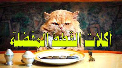 6 أكلات تحبها القطط كثيرا