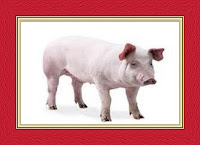  Pig Dream Meaning and Interpretations
