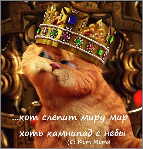 Блог Кота Моти  Cz9xmiDBqkA