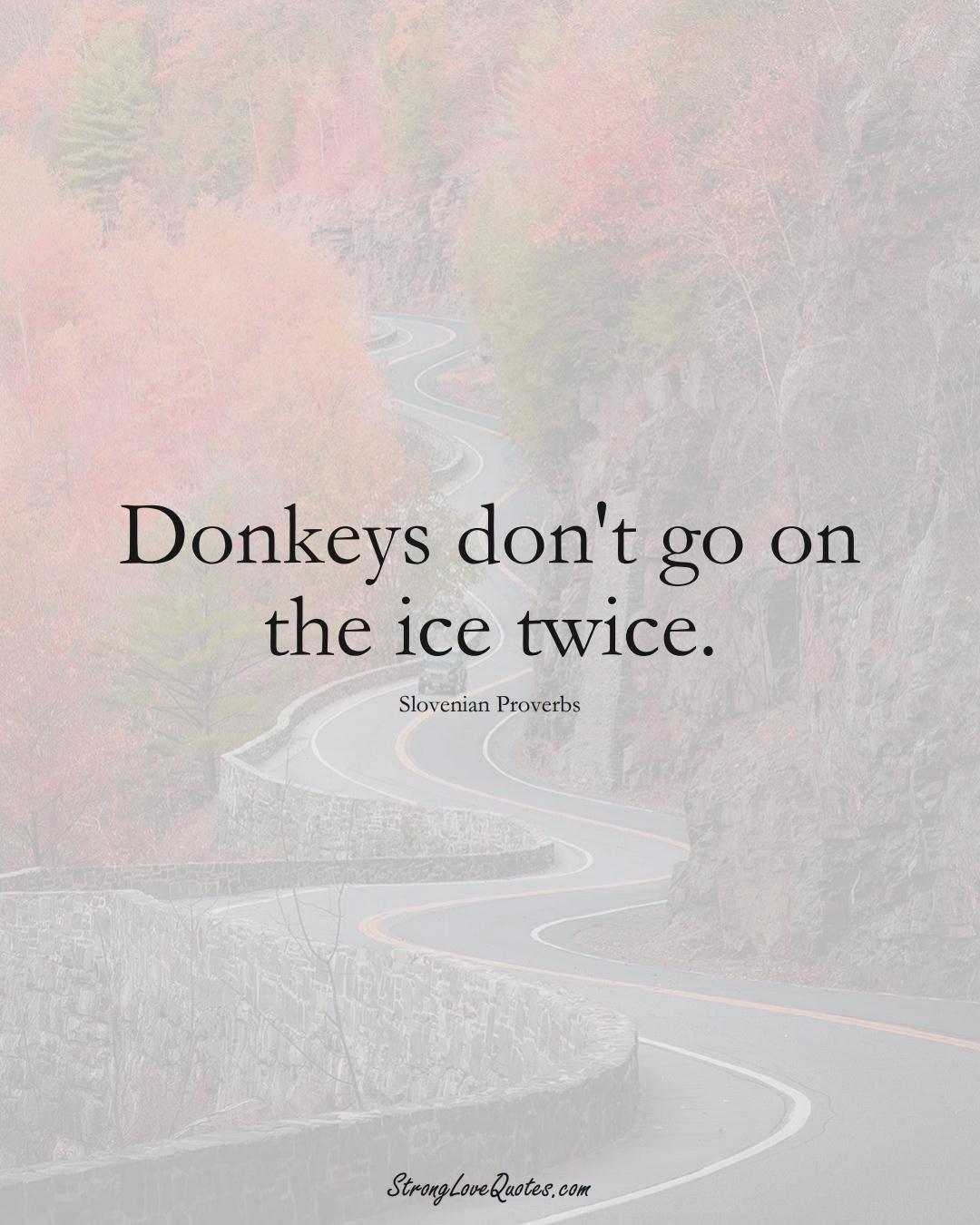 Donkeys don't go on the ice twice. (Slovenian Sayings);  #EuropeanSayings