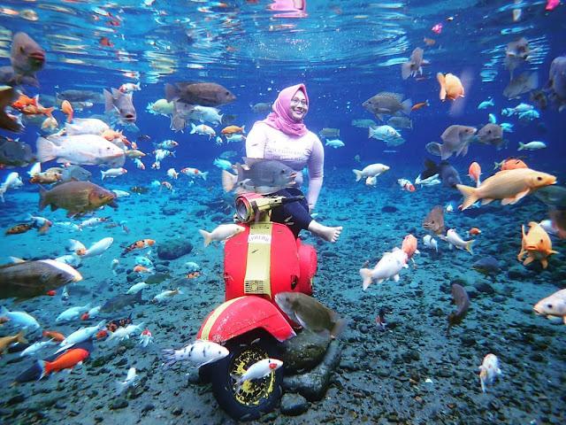 Experience The Underwater Life of Umbul Ponggok Klaten