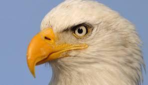 Eagle Eye-Eagle