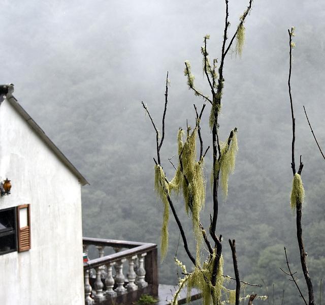 São Roque do Faial,madeira,madeiraisland,portugal,paradiseisland,safari,jeepsafari