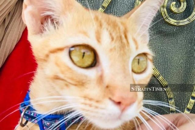 Kisah Disebalik Kejadian Kakak Baju Putih Bersama Kucingnya