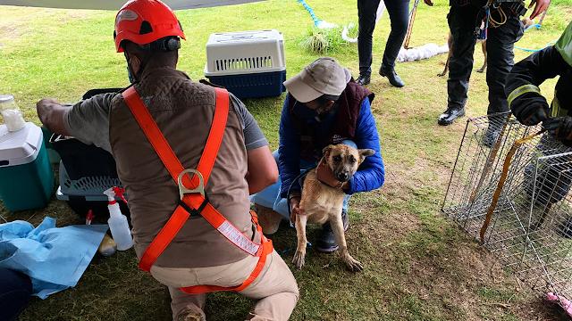 Ya fueron rescatados los perritos que habían caído en el socavón
