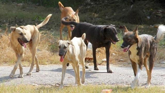 Κλείνει με απόφαση της Περιφέρειας το καταφύγιο ζώων συντροφιάς στο Άργος