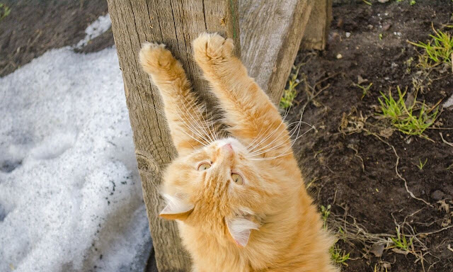 How to Train a Cat to Use a Scratching Post  Useful Tips