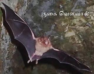 bat-in-cave