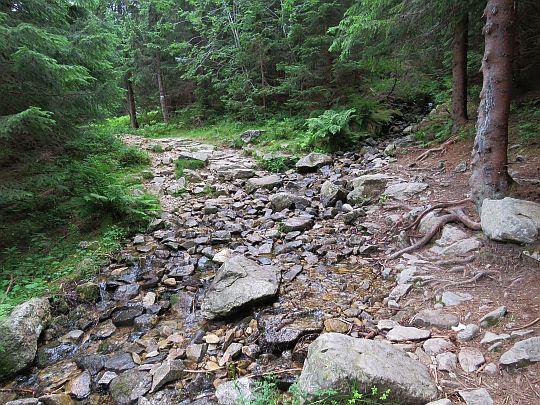 Przecinamy szlakiem ciek źródliskowy Wyżniego Potoku Chochołowskiego.