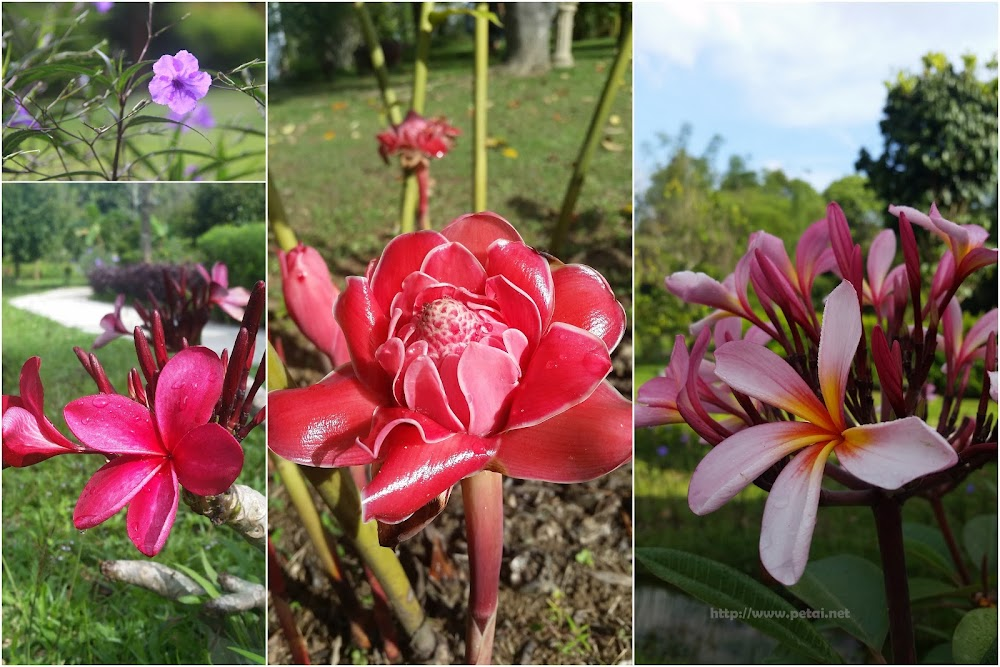 Bunga yang berwarna-warni