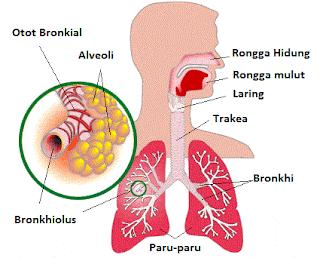 Pernafasan Manusia
