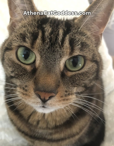 Tabby Cat Close-Up