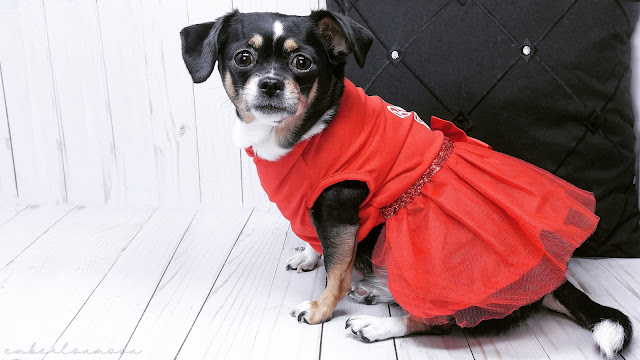 "Merry & Bright Holiday ""Best Gift Ever"" Tulle Pet Dress"