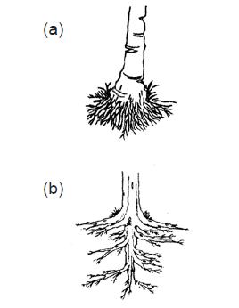 Bagian Bagian Tumbuhan Fungsi Akar Batang Daun Dan Bunga Aftanalisis