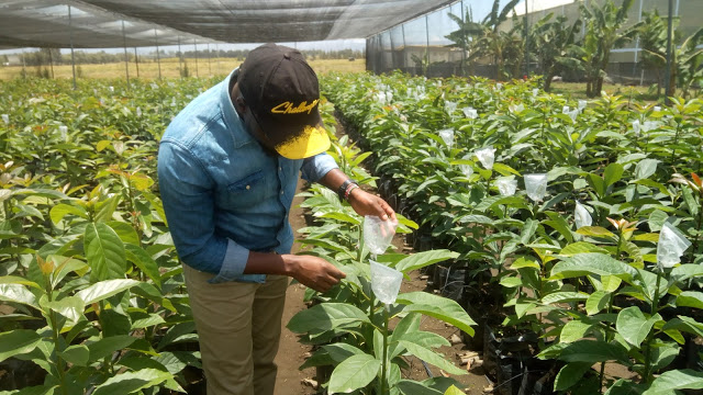 Despite the limitations of COVID-19 pandemic, Kenya's agriculture sector has performed well in the year 2020.