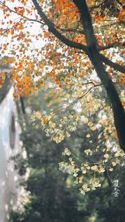 اجمل صور وخلفيات عن الطبيعة الساحرة