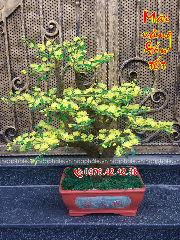 Goc bonsai cay hoa mai the huynh de tai Pham Van Bach