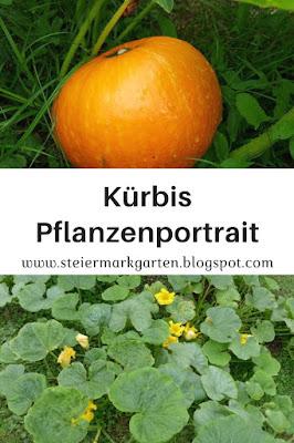 Kürbis-Pflanzenportrait-Pin-Steiermarkgarten