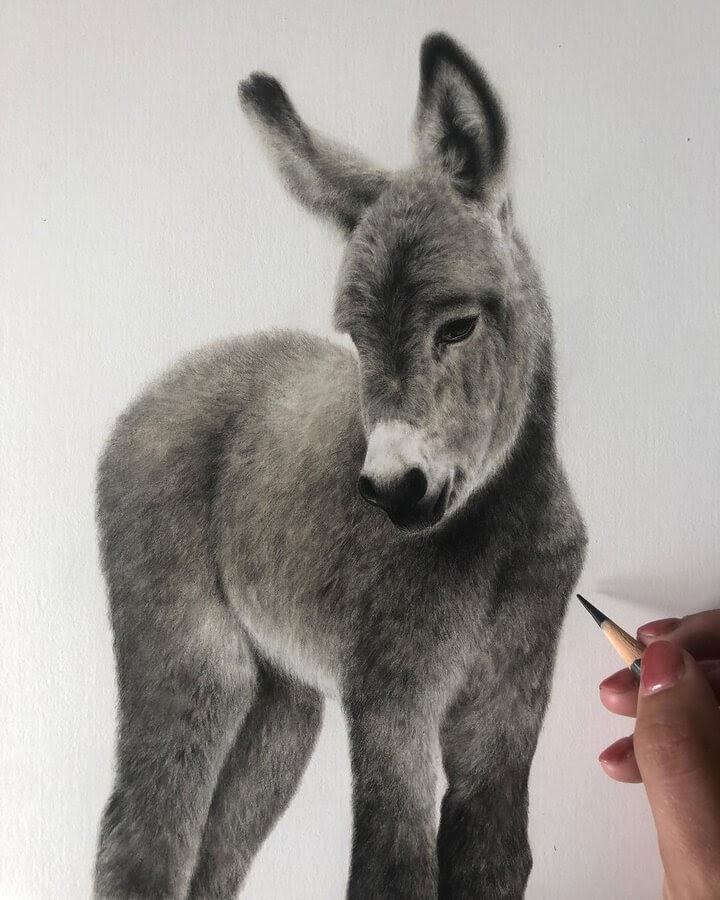 03-Baby-Donkey-Bethany-Vere-www-designstack-co