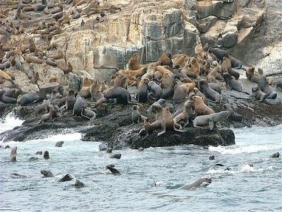 Islas del Callao, Tours Islas del Callao, leones marinos Callao