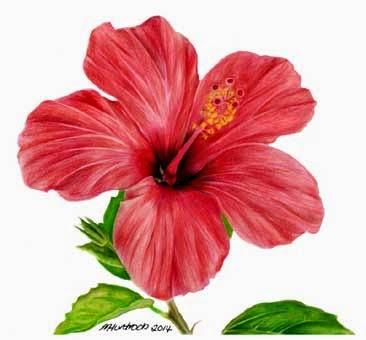 55 Gambar Lukisan Bunga Raya